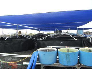 Random big outdoor seahorse tanks - 1