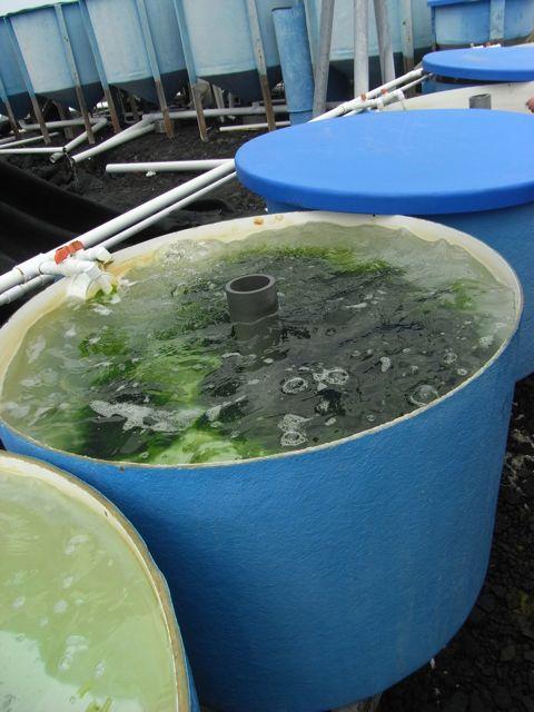 seaweed tub