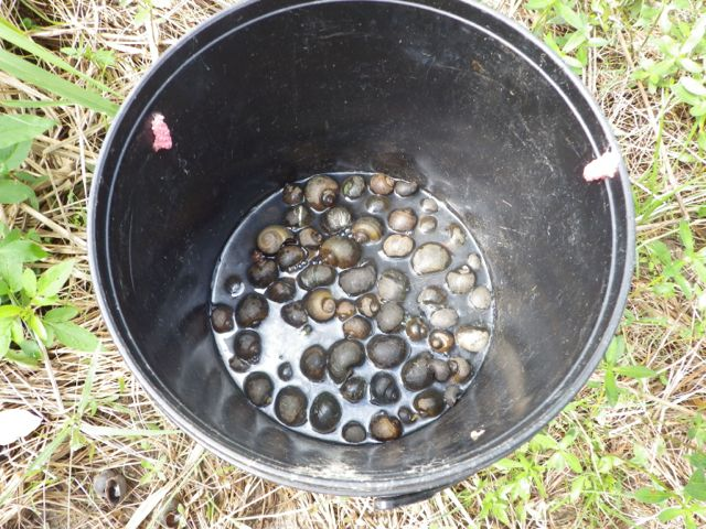 Snail hazmat bucket